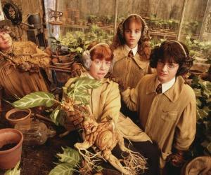 Mandrágora, em Harry Potter e a Câmara Secreta