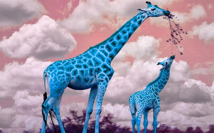 Blue Giraffes by Lara Beatriz