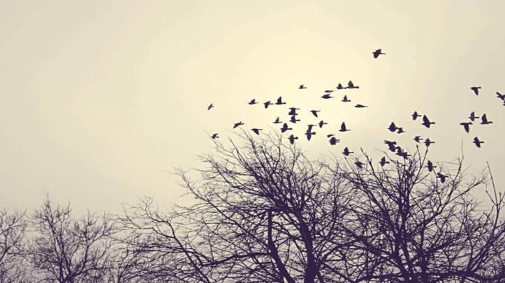 Liberdade (O Céu é logo ali).jpg