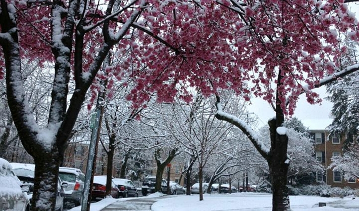 Neve na Primavera, de Sarah Jio .jpg
